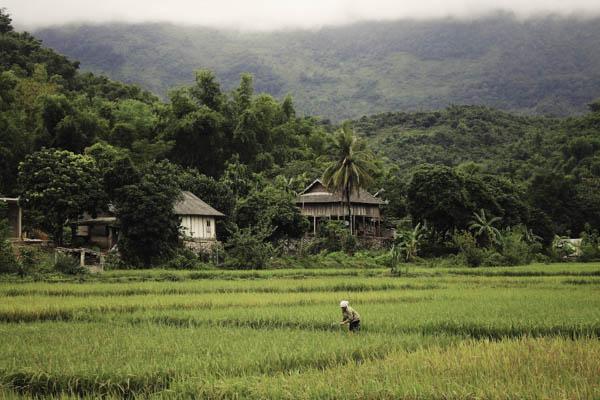 le village de Pom Coong à Mai Chau