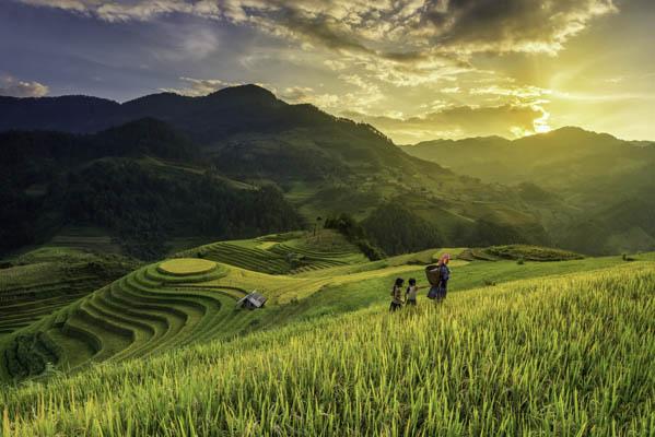la riziere en terrasse au nord du vietnam