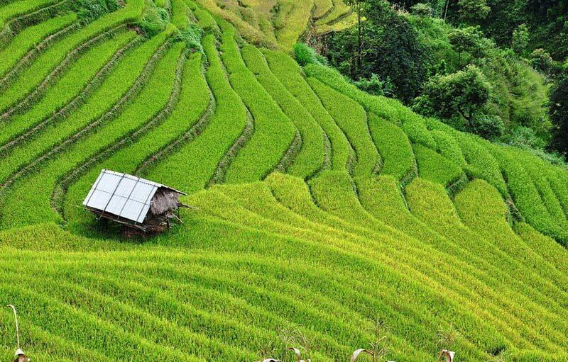 La Pan Tan, Mu Cang Chai Vietnam