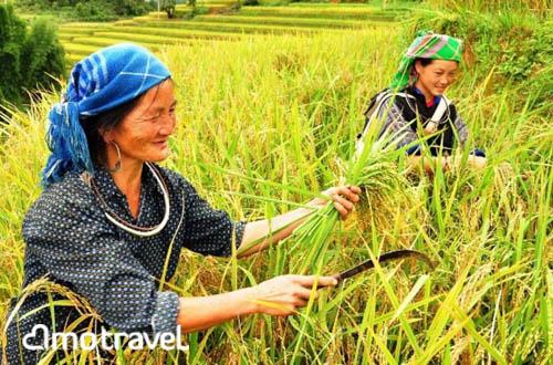 itinerario vietnam in 15 giorni